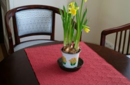 Narcis z Green Decor